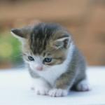 Kedi ekran koruyucusu 2