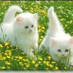 Kedi ekran koruyucusu 3