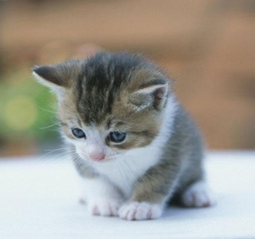 Kedi ekran koruyucusu indir