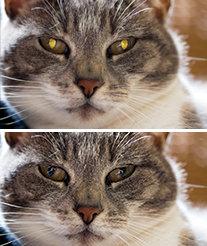 Pet Eye Fix Guide kedinin göz parlaması