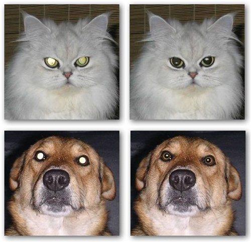 pet eye fix guide kedi köpek